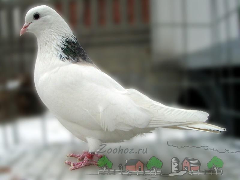 svaly a velké ptáky
